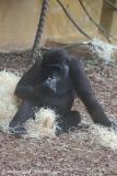 Zoo_Hannover_301015_IMG_0666