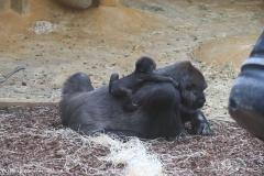 Zoo_Hannover_301015_IMG_0667