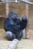 Zoo_Hannover_301015_IMG_0713