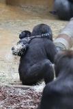 Zoo_Hannover_301015_IMG_0738