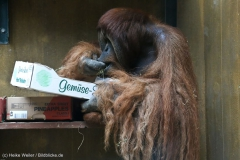 Zoo_Hannover_301015_IMG_0840