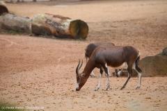 Zoo_Hannover_301015_IMG_0844