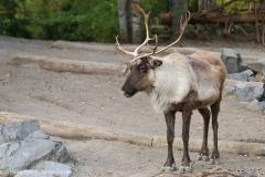 Zoo_Hannover_301015_IMG_0855