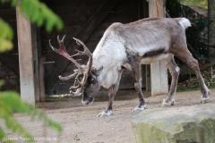 Zoo_Hannover_301015_IMG_0858