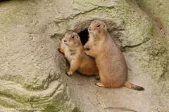 Zoo_Hannover_301015_IMG_0881
