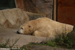 Zoo_Hannover_301015_IMG_0883