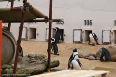 Zoo_Hannover_301015_IMG_0884