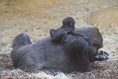 Zoo_Hannover_301015_IMG_0662