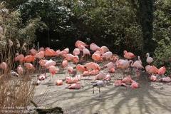 Zoo_Hannaover_310317_IMG_3721