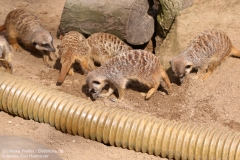 Zoo_Hannaover_310317_IMG_3744