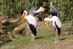 Zoo_Hannaover_310317_IMG_3748