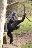 Zoo_Hannaover_310317_IMG_3768