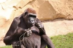 Zoo_Hannaover_310317_IMG_3781