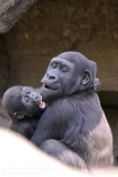 Zoo_Hannaover_310317_IMG_3786