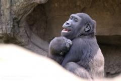 Zoo_Hannaover_310317_IMG_3787