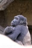 Zoo_Hannaover_310317_IMG_3788