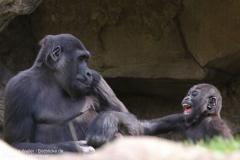 Zoo_Hannaover_310317_IMG_3809
