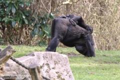 Zoo_Hannaover_310317_IMG_3825