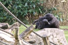 Zoo_Hannaover_310317_IMG_3828