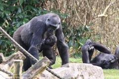 Zoo_Hannaover_310317_IMG_3844