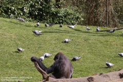Zoo_Hannaover_310317_IMG_3846