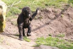 Zoo_Hannaover_310317_IMG_3855