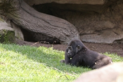 Zoo_Hannaover_310317_IMG_3891