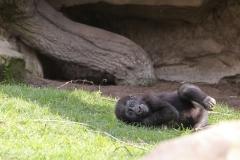Zoo_Hannaover_310317_IMG_3893