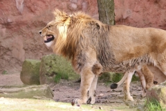 Zoo_Hannaover_310317_IMG_4317