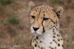 Zoo Koeln_070918_IMG_7924