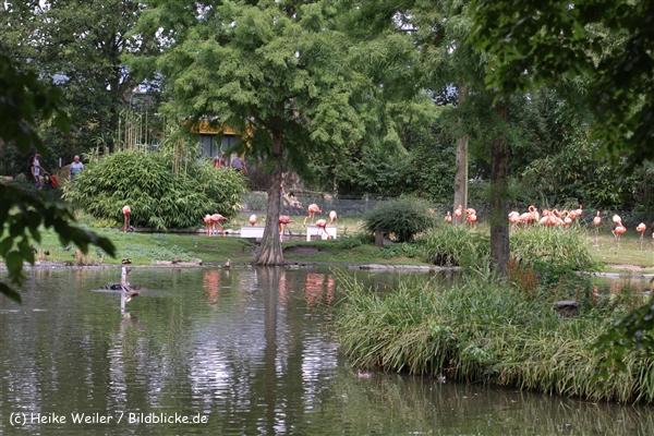 Zoo Koeln 230710- IMG_7942