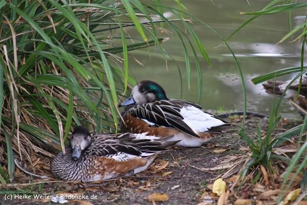 Zoo Koeln 230710- IMG_7948