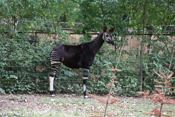 Zoo Koeln 230710- IMG_8102