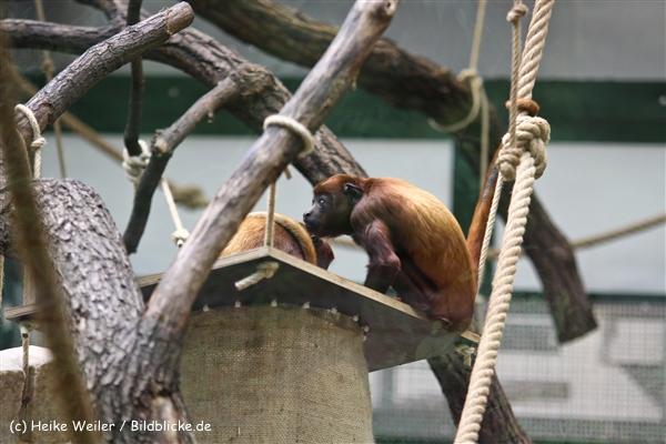 Zoo Koeln 230710- IMG_8115