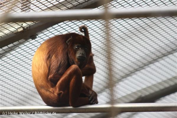 Zoo Koeln 230710- IMG_8126