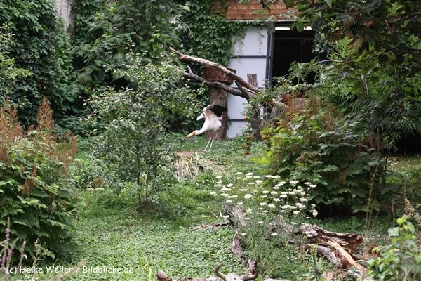 Zoo Koeln 230710- IMG_8138