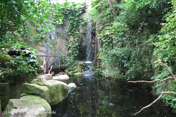 Zoo Koeln 230710- IMG_8157_1426