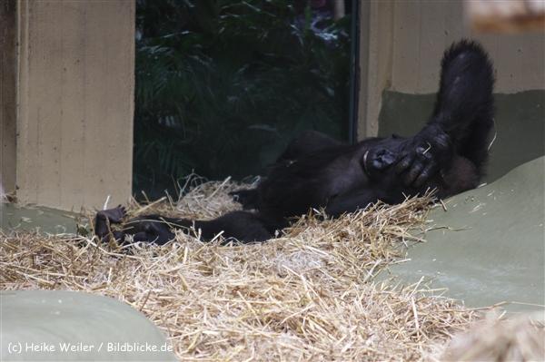 Zoo Koeln 230710- IMG_8283