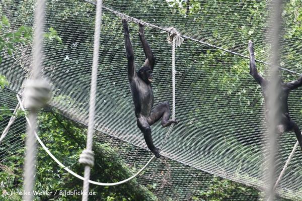 Zoo Koeln 230710- IMG_8319