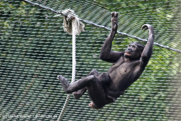 Zoo Koeln 230710- IMG_8321