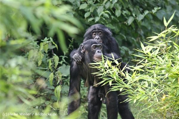Zoo Koeln 230710- IMG_8322