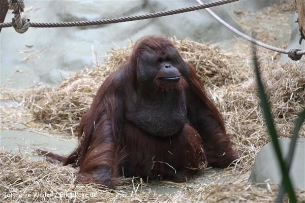 Zoo Koeln 230710- IMG_8330
