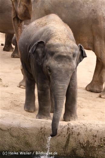 Zoo Koeln 230710- IMG_8369