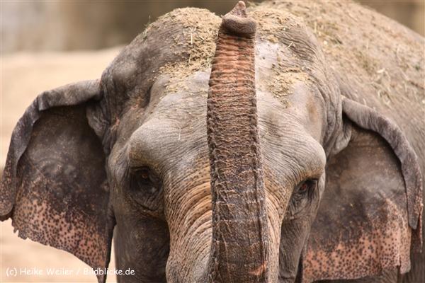 Zoo Koeln 230710- IMG_8382