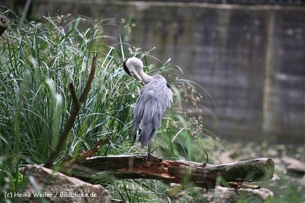 Zoo Koeln 230710- IMG_8528