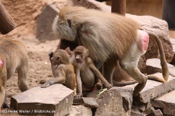 Zoo Koeln 230710- IMG_8551