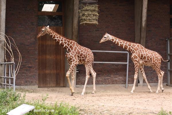 Zoo Koeln 230710- IMG_8598