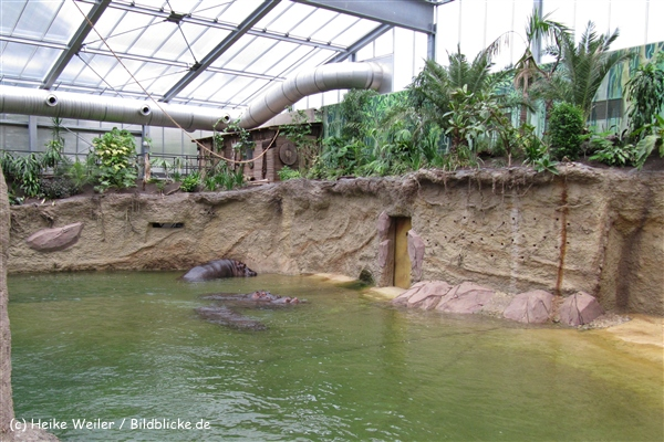 Zoo Koeln 230710- IMG_8637_1461