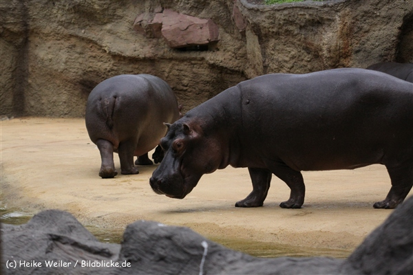 Zoo Koeln 230710- IMG_8638