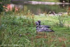 Zoo Koeln 230710- IMG_7950